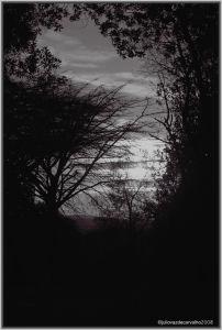 photo copyright