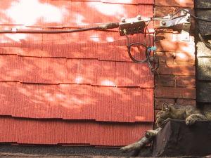 (c) openphoto.net
