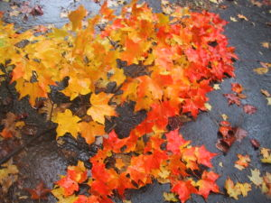 autumn and fall images